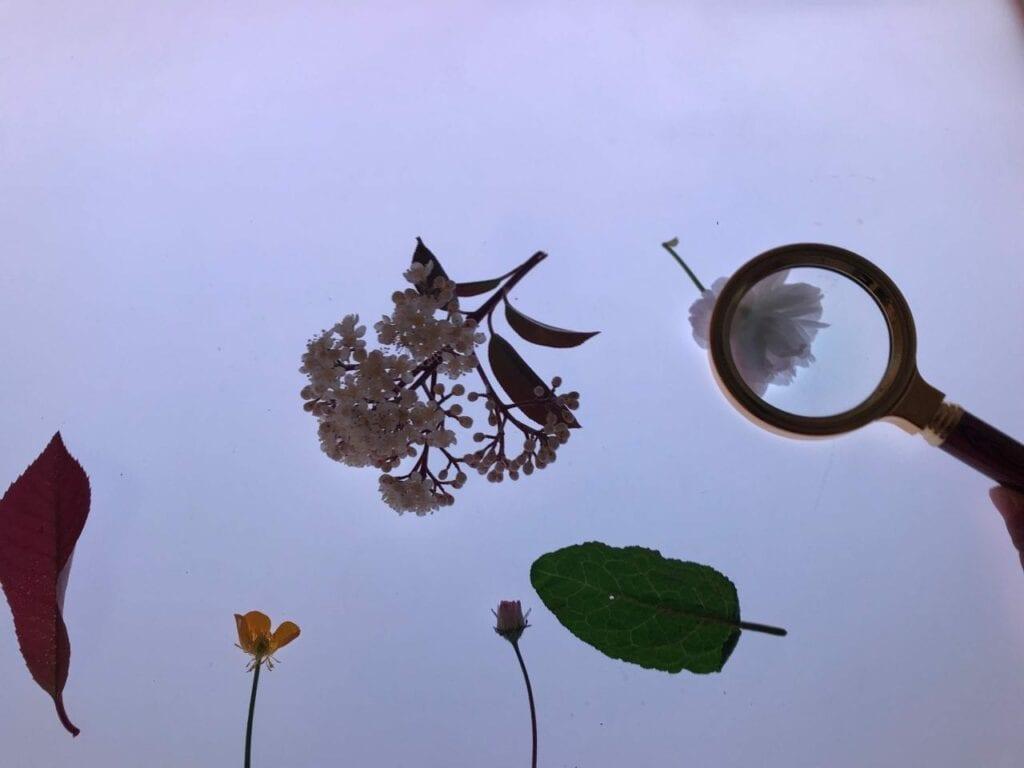 flores da primavera na mesa de luz 06