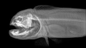 radiografias de animais para imprimir 08