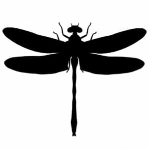 silhueta de libelula para imprimir