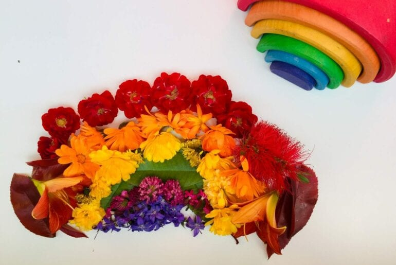 flores com as cores do arco iris 01
