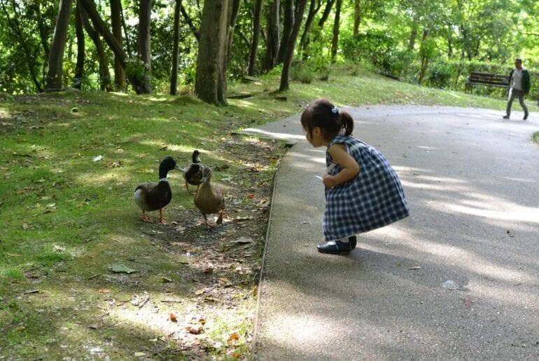 amor pelos animais 01