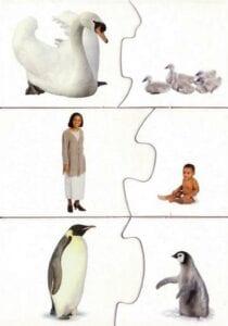 associacao de conceitos mamae e bebe 04
