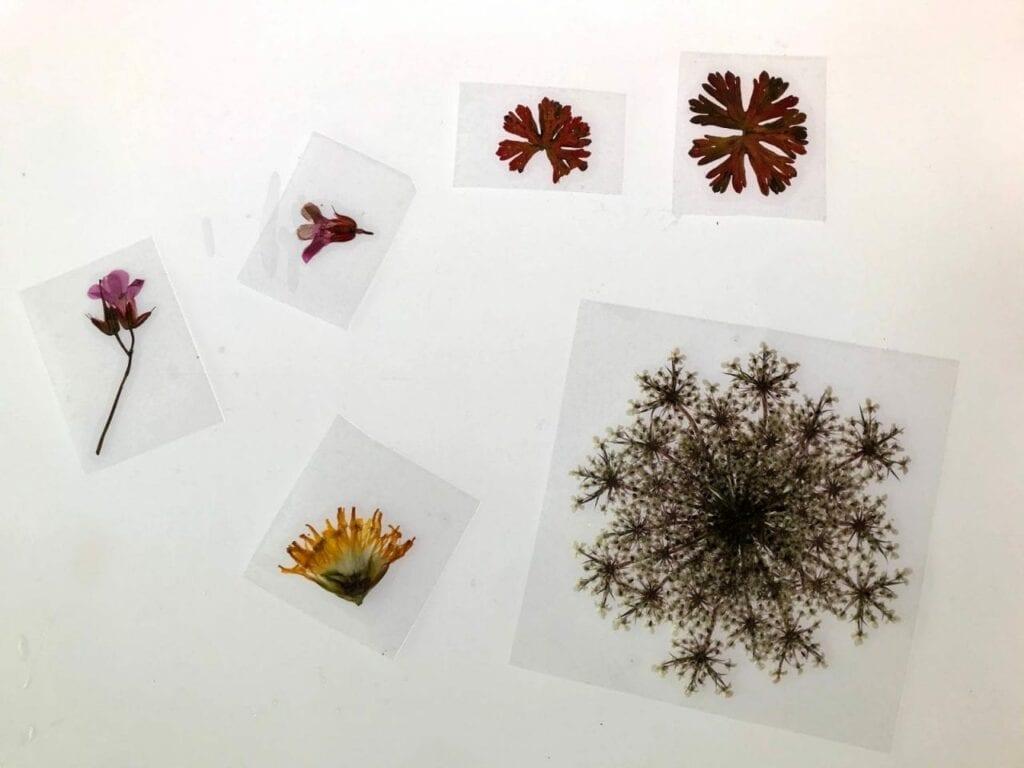 atividade da primavera como secar flores 06