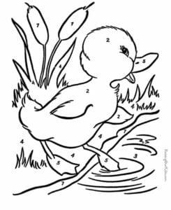 colorir com numero pato