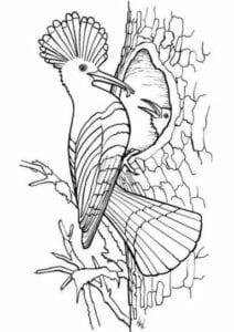 desenho da primavera para pintar