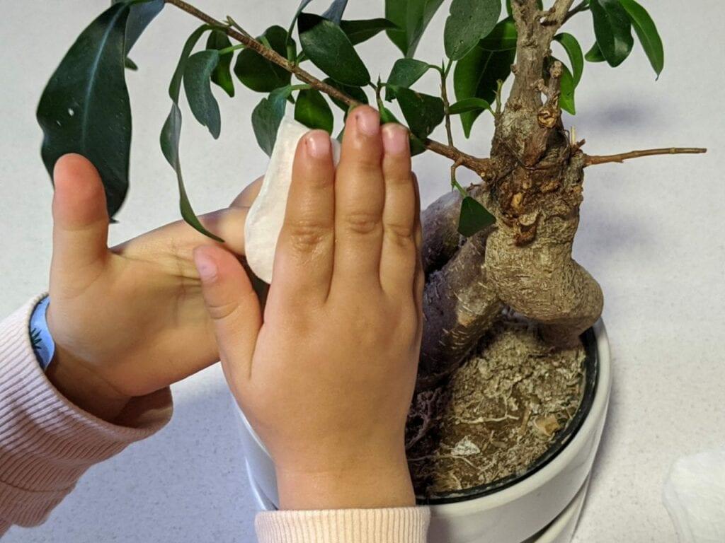 limpar plantas atividade de vida pratica 01