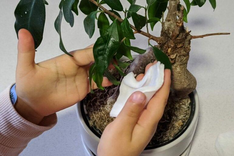 limpar plantas atividade de vida pratica 02