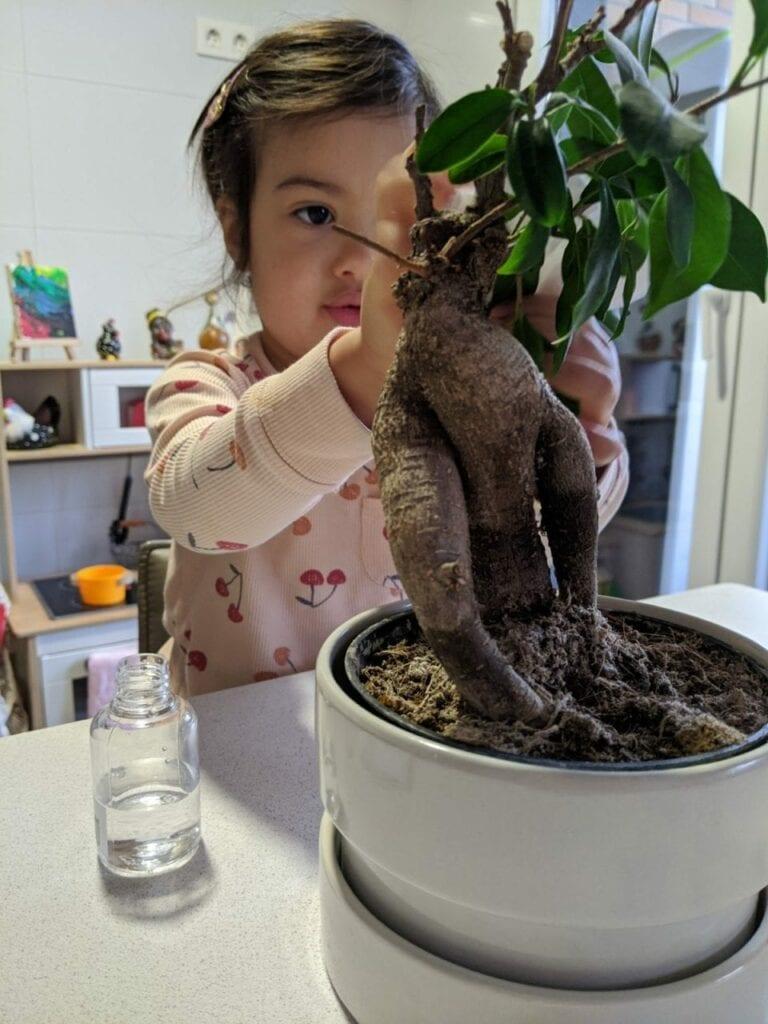 limpar plantas atividade de vida pratica 03