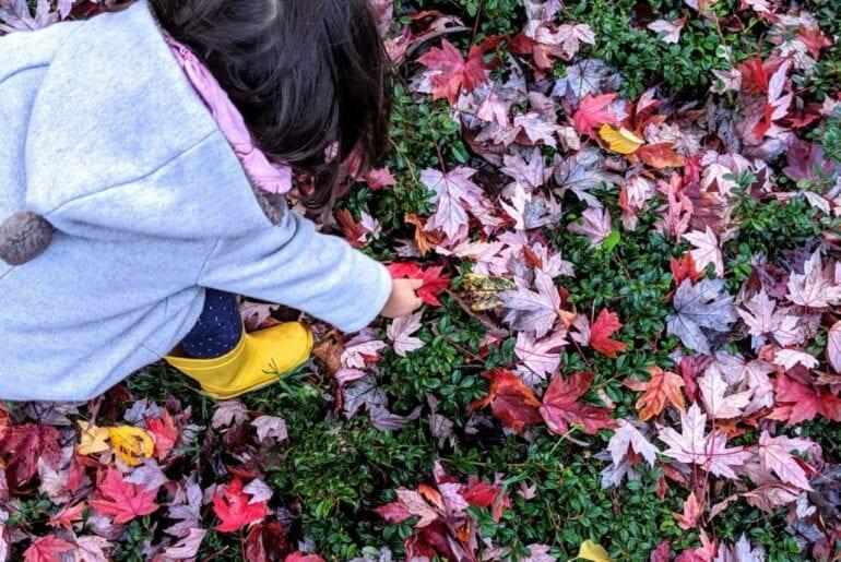 atividades de outono para educacao infantil