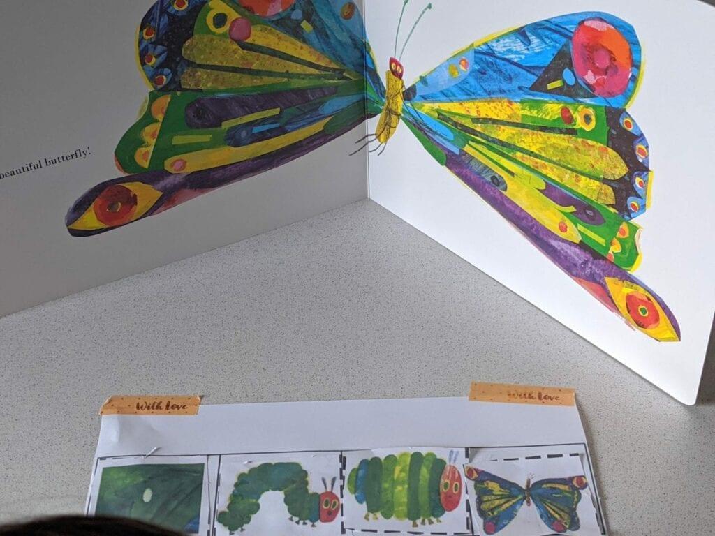 ciclo da borboleta uma lagarta muito comilona