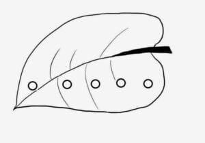 lagarta comilona para colorir