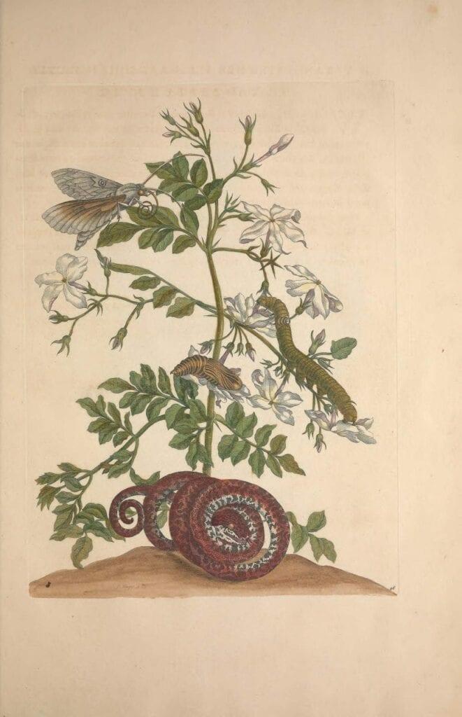 aquarela botanica 03