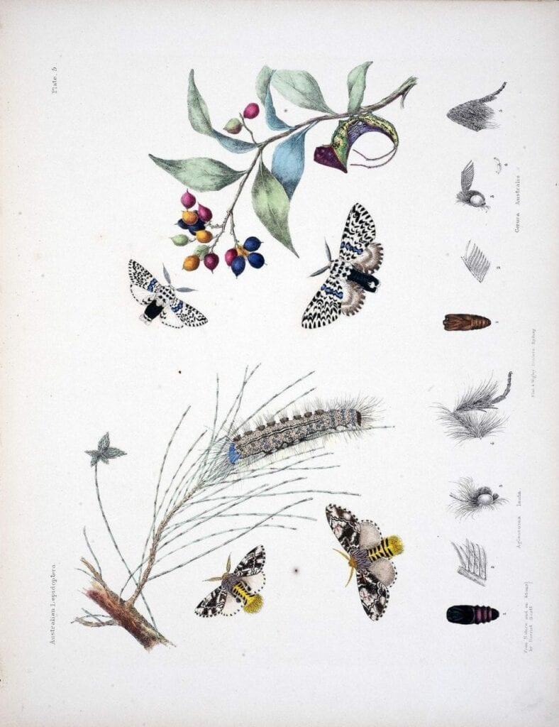 desenho botanico cientifico 02