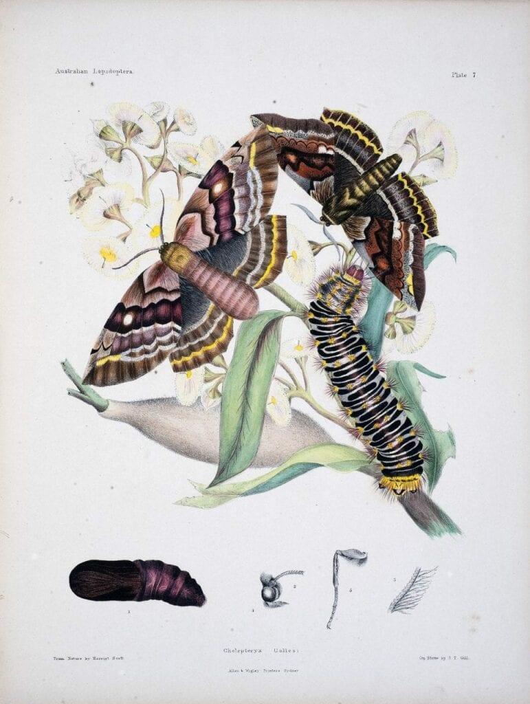 desenho botanico cientifico 03