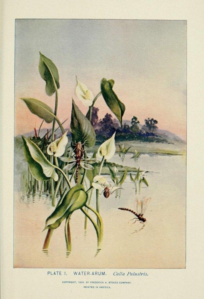 desenhos botanicos