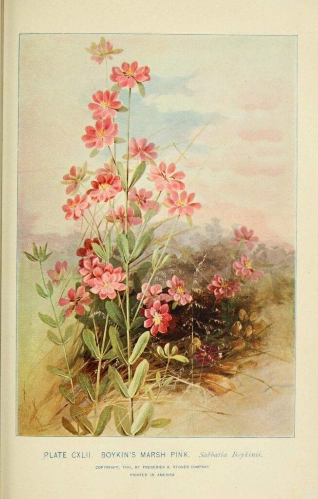 ilustracao botanica