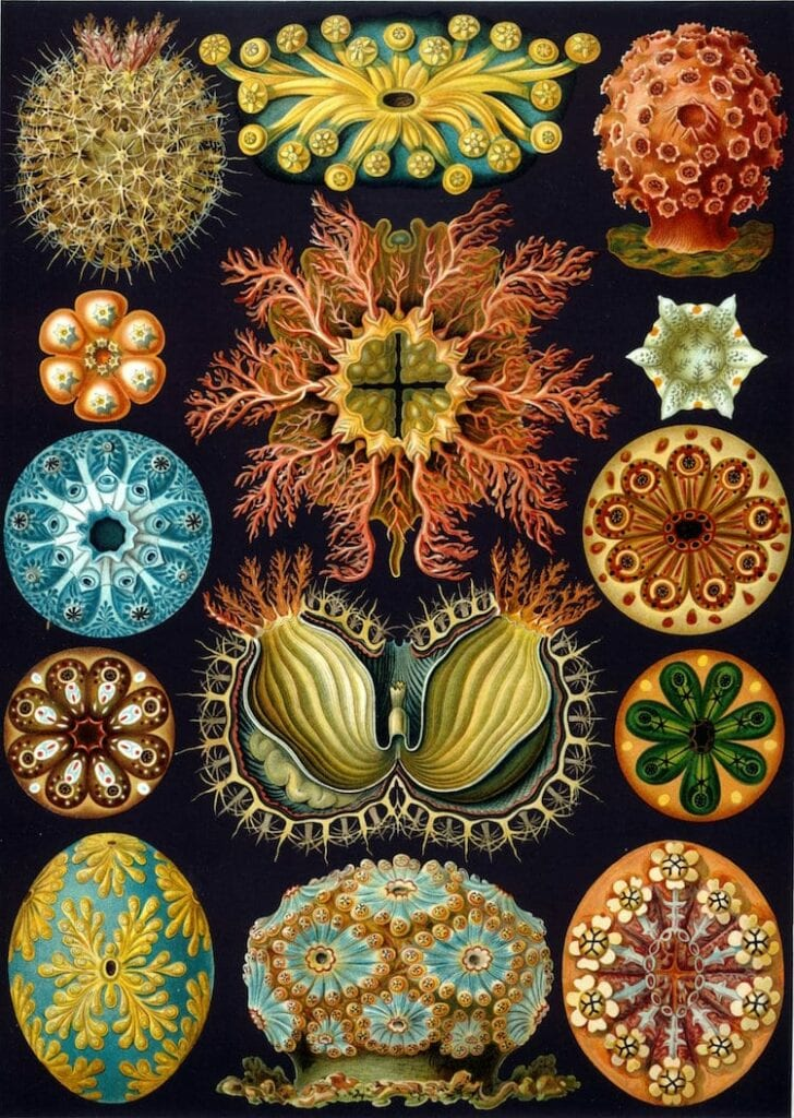 ilustracao botanica aquarela 01