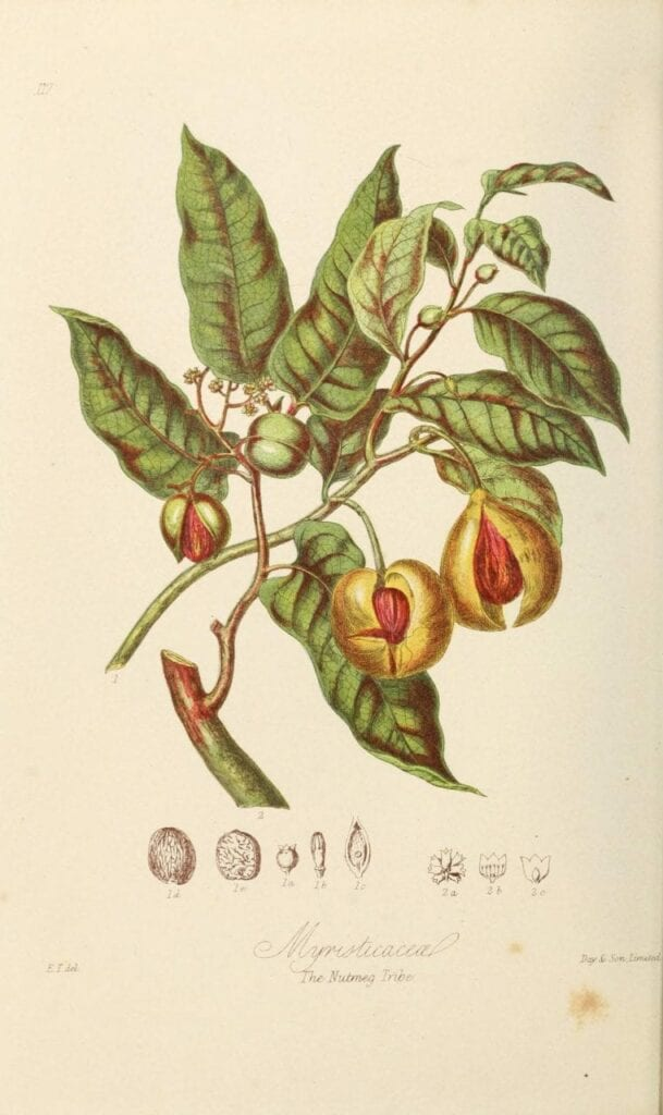 ilustracoes botanicas 01