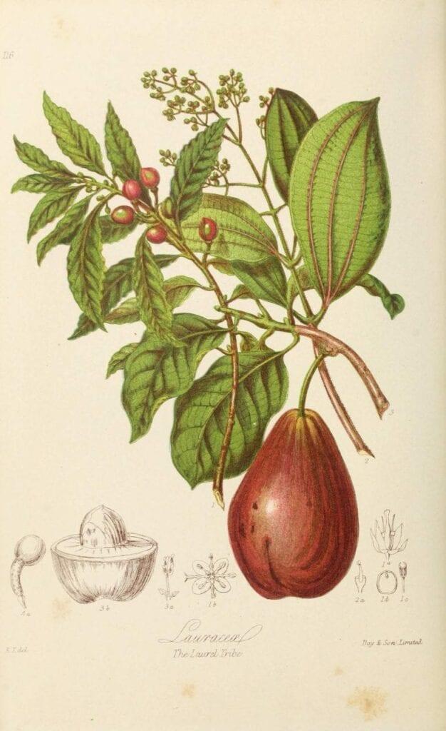ilustracoes botanicas 03