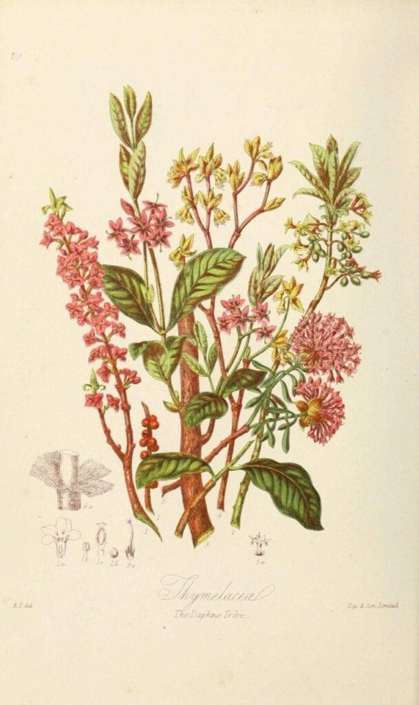 ilustracoes botanicas 07