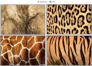 atividade com animais selvagens e suas peles 01