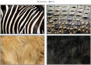 atividade com animais selvagens e suas peles 02
