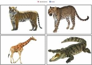 atividade com animais selvagens e suas peles 03