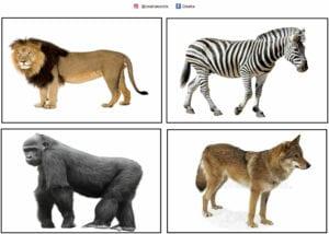 atividade com animais selvagens e suas peles 04