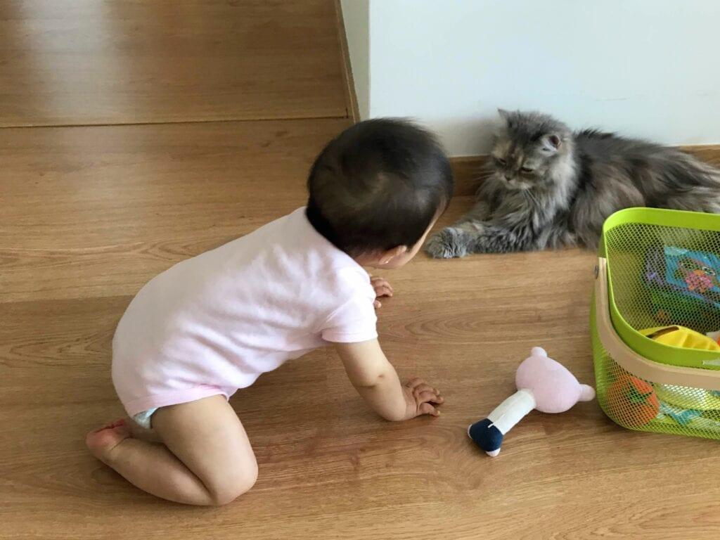 brincadeiras e atividades para bebes de 8 meses 09