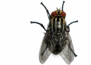 imagens de insetos para fazer atividades 01