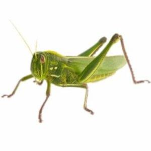imagens de insetos para fazer atividades 03