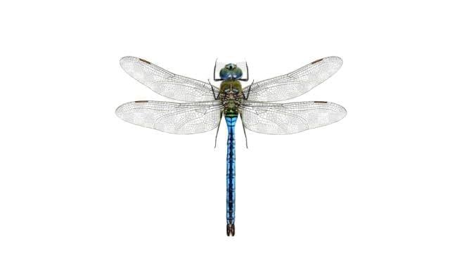 imagens de insetos para fazer atividades 06