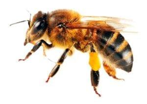 imagens de insetos para fazer atividades 09
