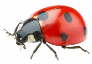 imagens de insetos para fazer atividades 11
