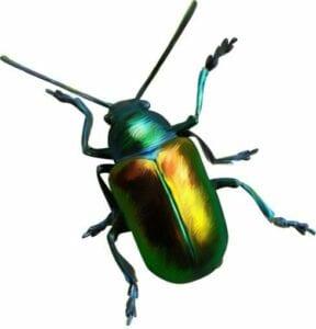 imagens de insetos para fazer atividades 13