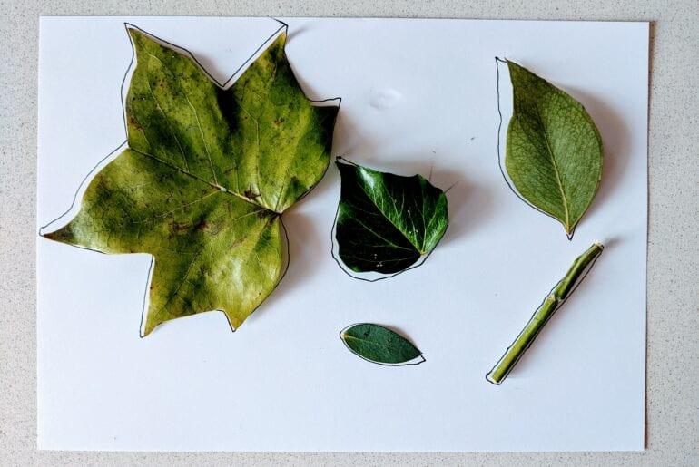 Atividade de pareamento com folhas 02