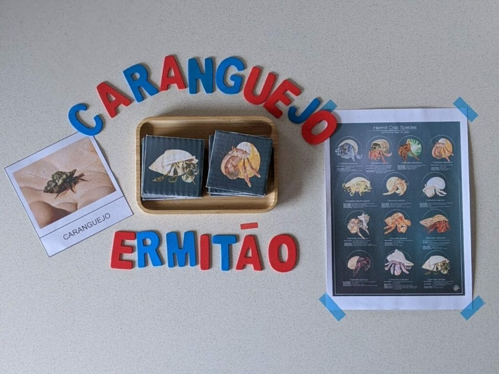 Atividades com caranguejo ermitao para criancas