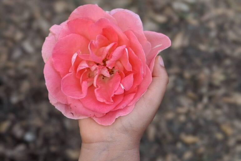arranjo de flores atividade montessoriana