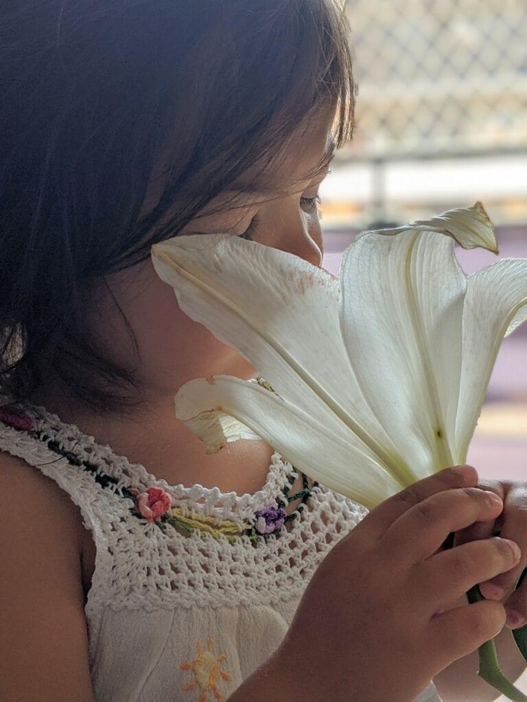 arranjo de flores atividade vida pratica montessori