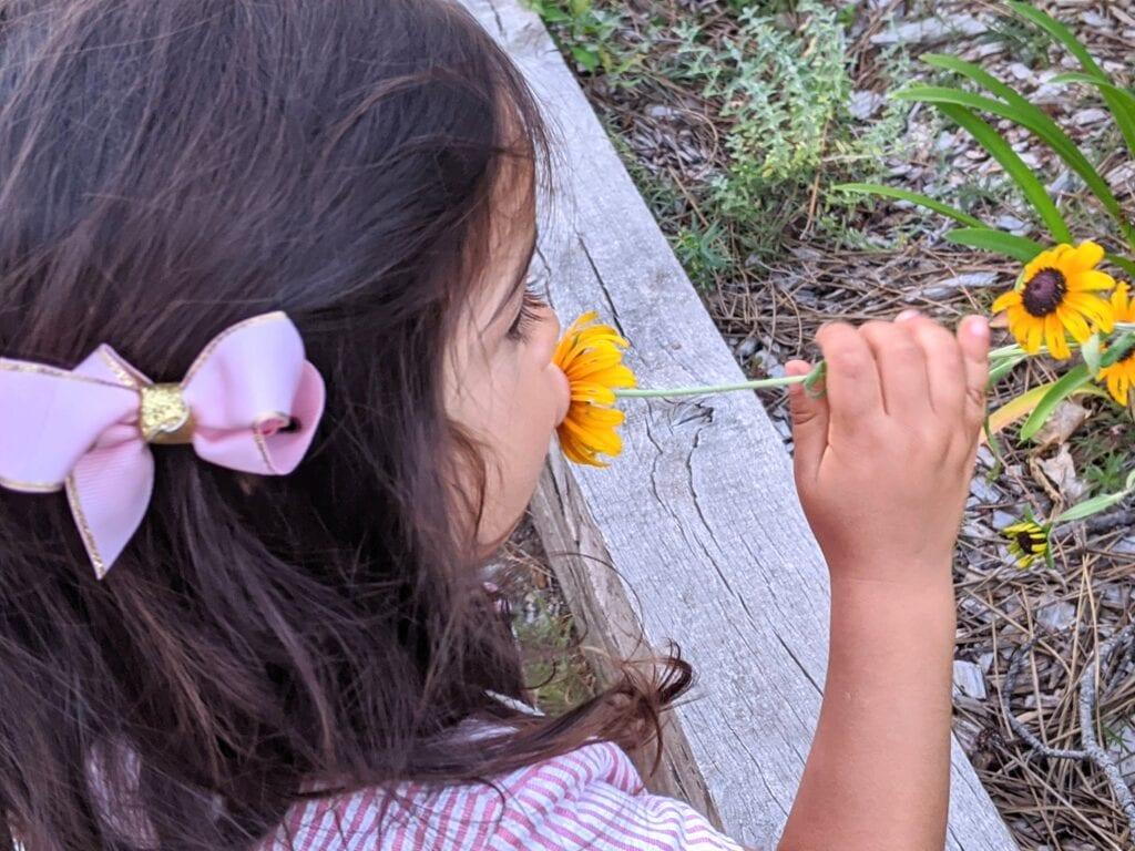 atividade de flor