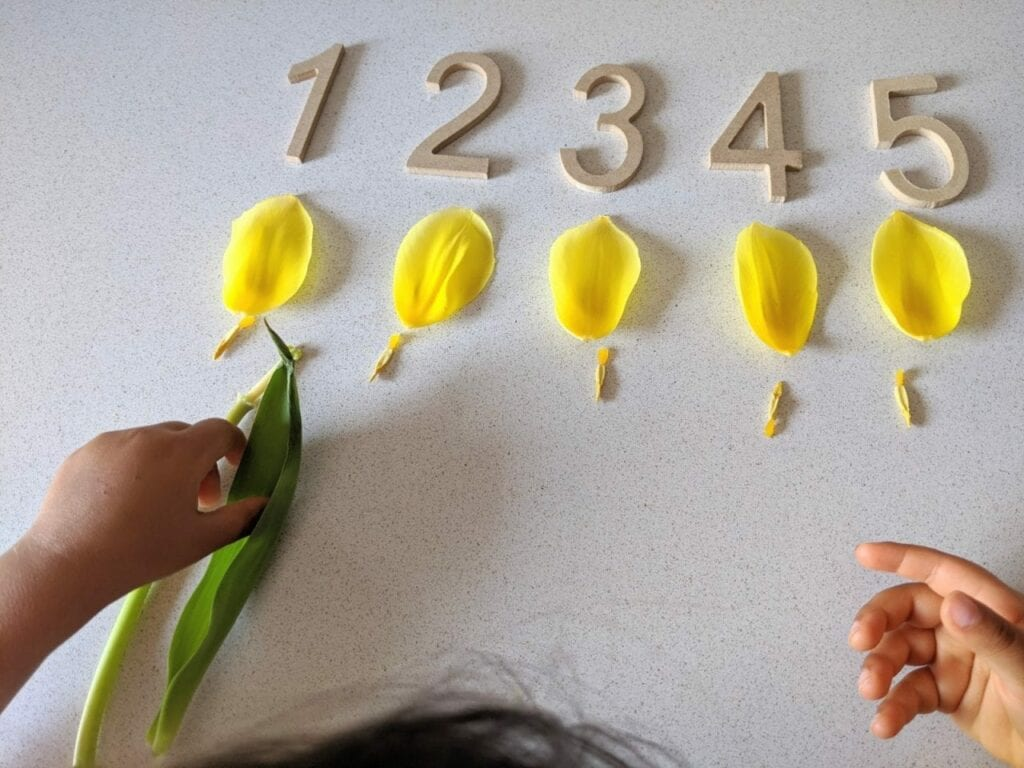 atividade de matemática com tulipa flores