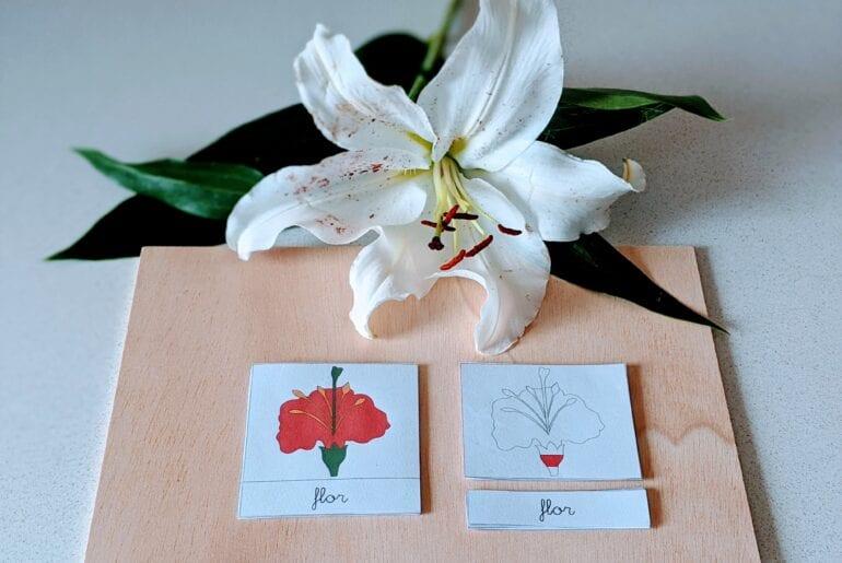 atividade sobre as partes da flor - cartões de tres partes