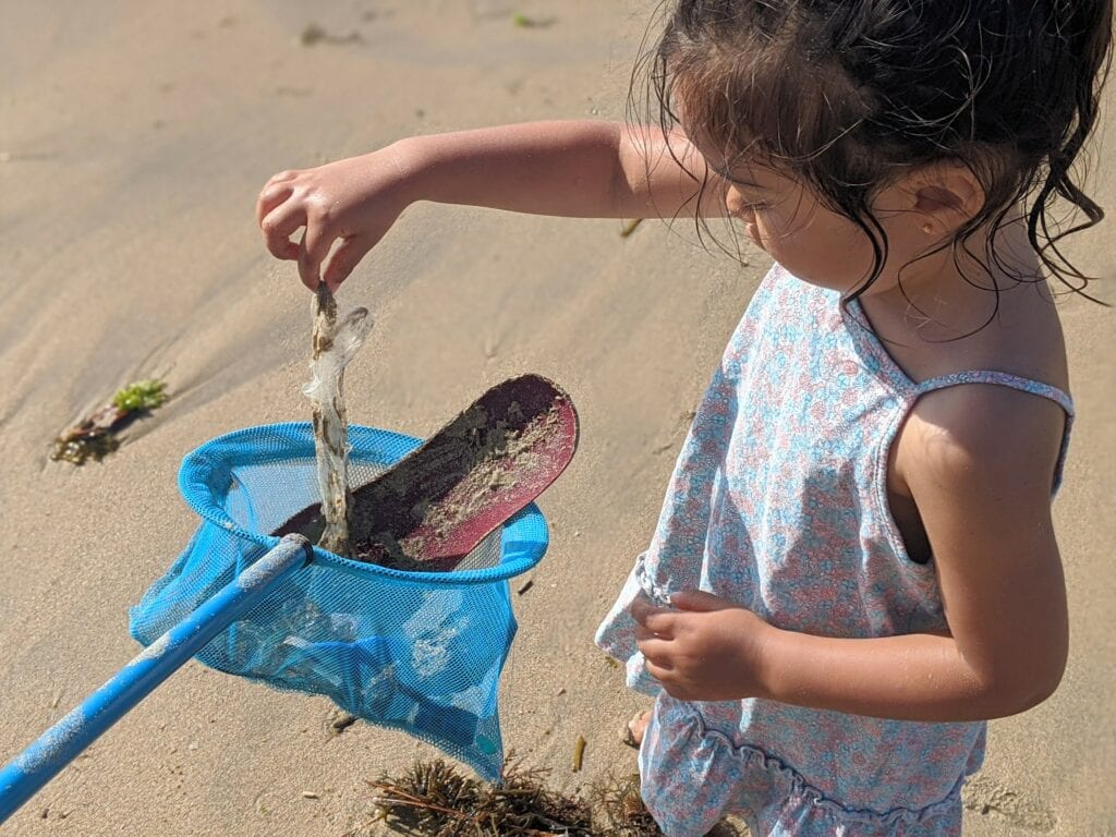 atividades para fazer na praia - recolher lixo