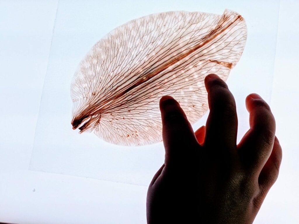 atividades sobre partes da flor - mesa de luz 03