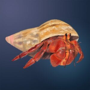 caranguejo eremita para imprimir 01