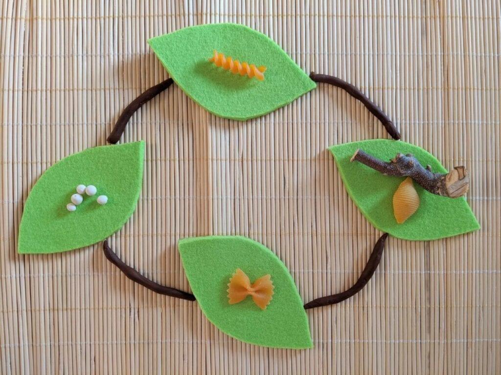 ciclo de vida borboleta