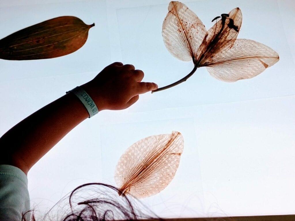 partes da flor na mesa de luz