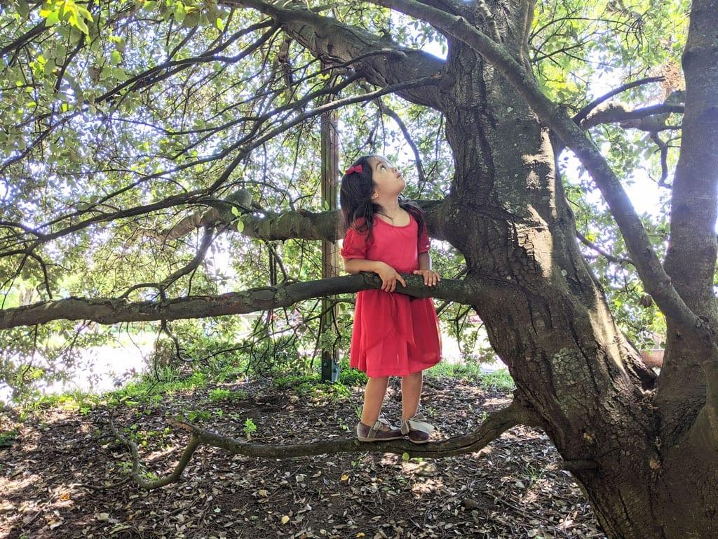 Atividade motora grossa - subir árvores