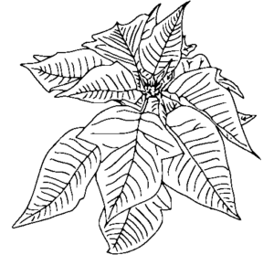 simbolos natalinos para colorir flor de pascoa