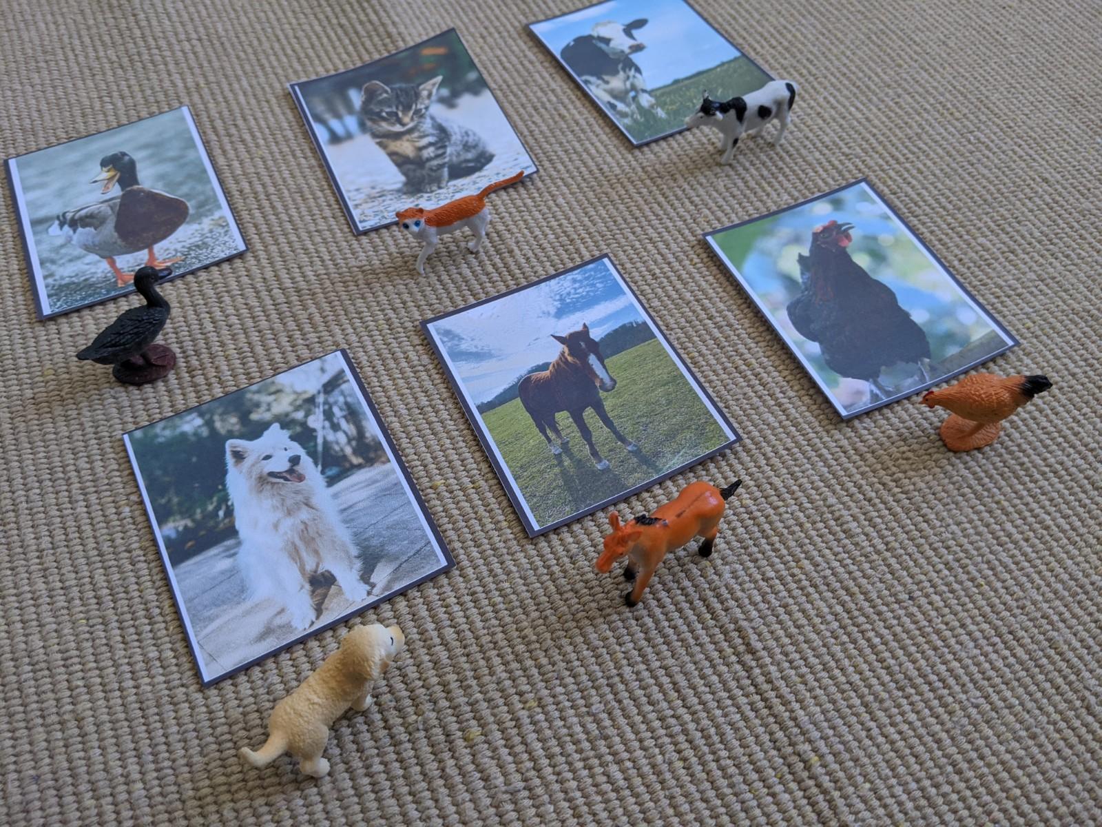 atividade com animais domesticos pareamento